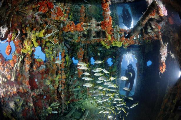 Coral reef in a sunken school bus or something.