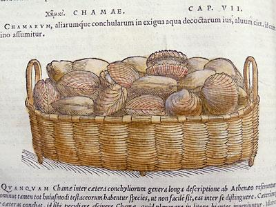 Basket_of_shells